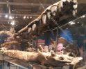 Jurassic Finds