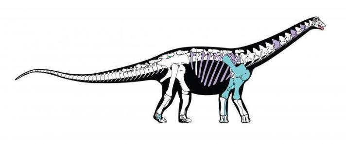mansourasaurus-shahinae-bones