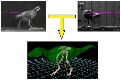 Bird Dinosaur Model