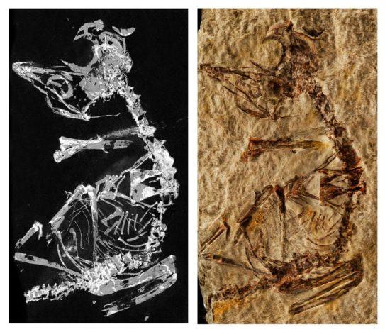 Bird fossil image