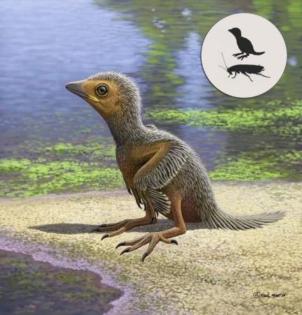 Fossil Bird 2