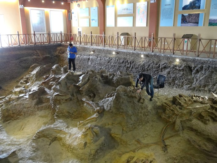 Lingwulong fossils at excavation site