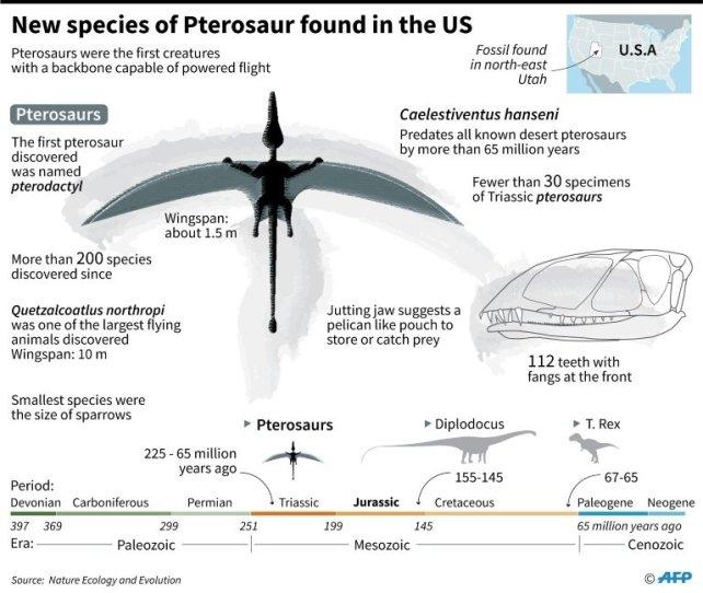 Pterosaur info image