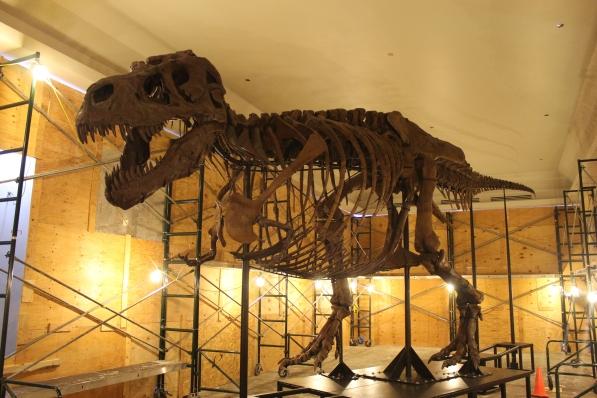 SUE_Tyrannosaurus_New_Mount