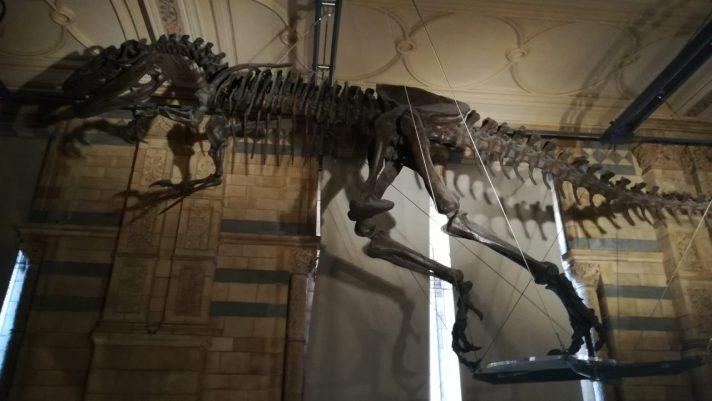 cropped-allosaurus-best-photo1.jpg