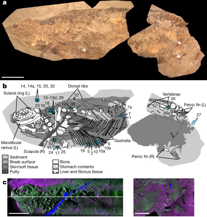 Ichthyosaur Image 1
