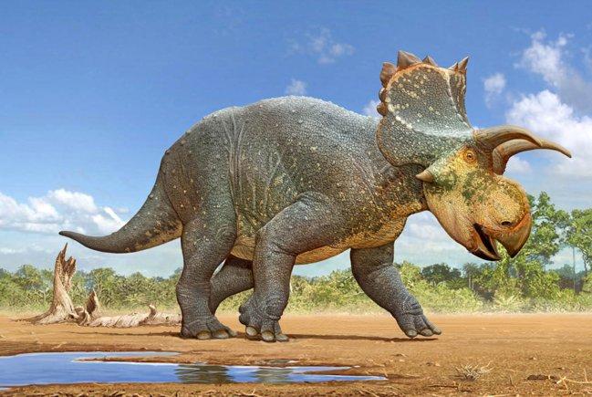 image_6729e-crittendenceratops-krzyzanowskii