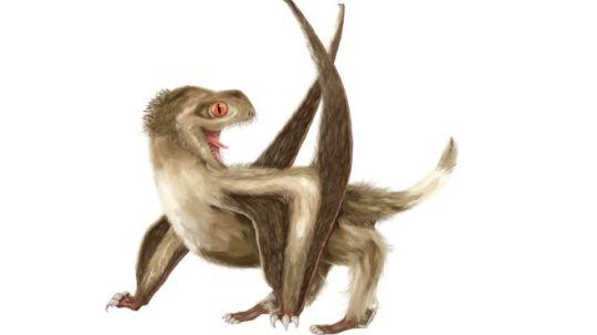 pterosaur-8167