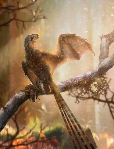 image_7170-Ambopteryx-longibrachium